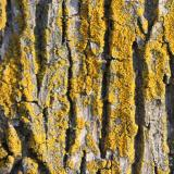 Tree Bark iPad wallpaper image